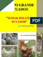 Manejo de Pollitas 2013