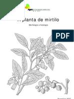 2 a Planta de Mirtilo Morfologia e Fisiologia