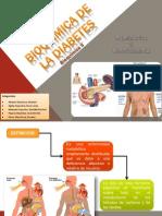 Bioquímica de la diabetes