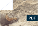 Dinosaurios Jurasicos