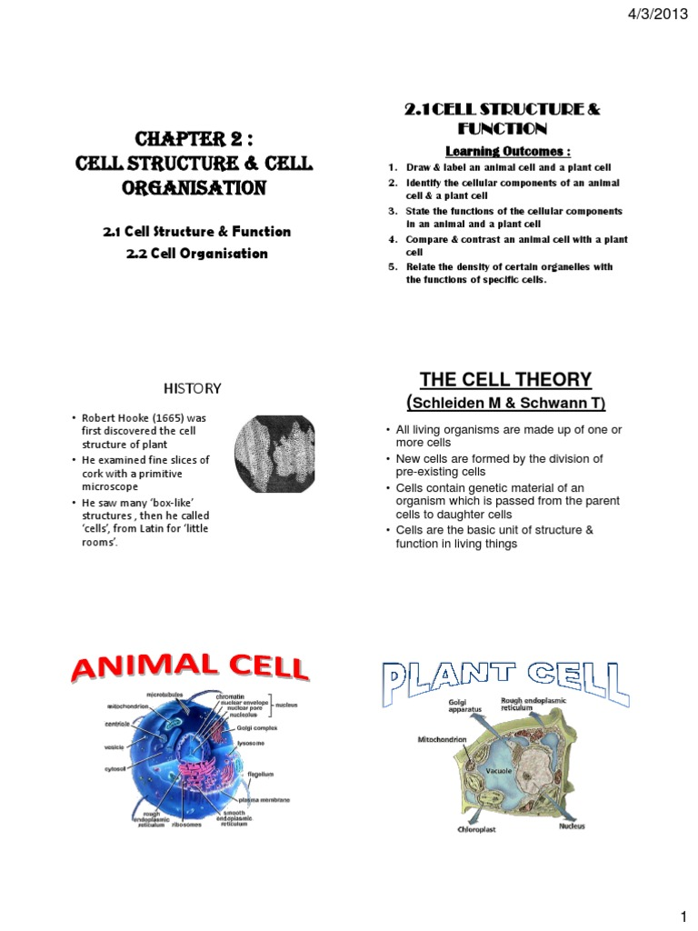 Chapter 21 Cell Structure And Function Endoplasmic Reticulum Plant Animal Diagram Simple Biology