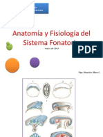Anatomia Sist Fonatorio