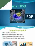Gena Tp53