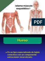 02 Sistema músculo-esquelético I