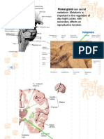 Cerebellum & Diencephalon
