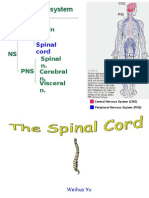 Spinal Cord1