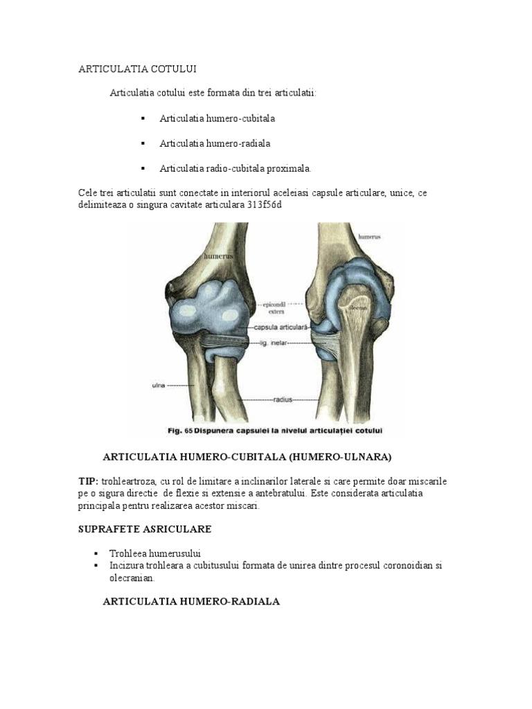 articulatia cotului descriere cum se poate trata artroza poate fi vindecată