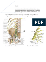 anatomi lumbo sakral
