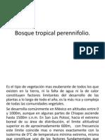 Bosque Tropical Perennifolio