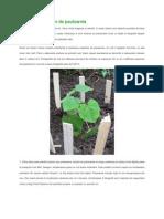 Ingrijirea Copacilor de Paulownia
