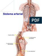 05 Sistema Arterial