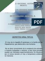 HEPATITIS  B  Y  C.