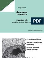 Genomes3e_ppt_ch10