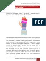 7.6.tratamiento_fisoterapeutico_de_los_tendonesextensores.pdf