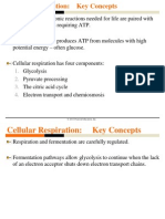 09 Cellular Respiration