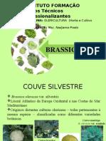 brassicaceae.ppt