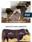Ejemplos de Cruzamientos Mejoramiento_tropico