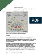 Diagrama Del Metabolismo de Los Neurotrasmisores
