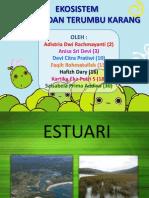 Estuari (1)