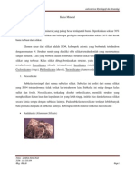 Kelas Mineral -Silikat, Sulfida, Oksida