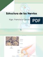 Estructura de Los Nervios