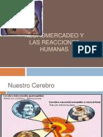 Neuromercadeo y Las Reacciones Humanas