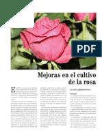 Rosas Hidroponia El Maresme