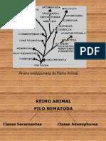 Zoologia_..