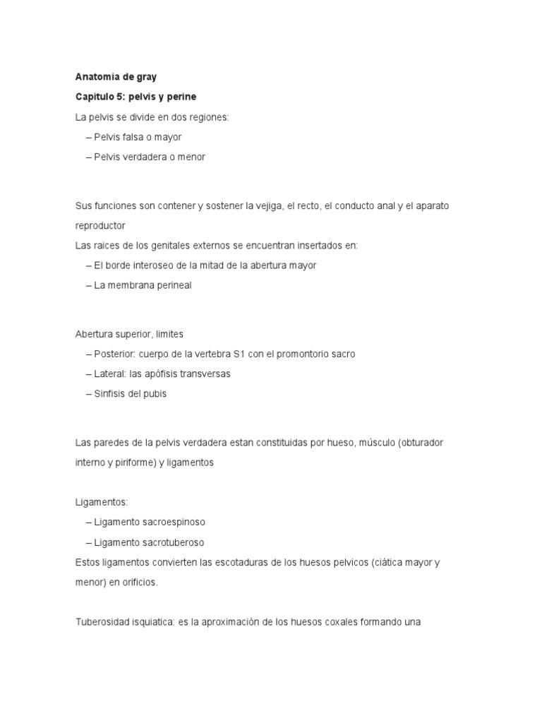Anatomia de gray pelvis y perine.doc