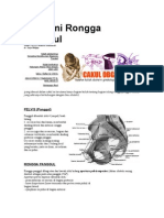 Anatomi Rongga Panggul