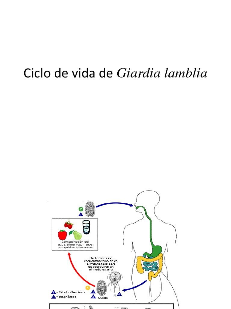 Giardia duodenalis ciclo de vida - koronakor.hu
