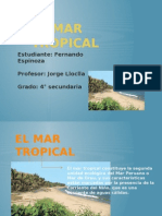 Fernando Mar Tropical