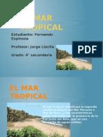 Fernando Mar Tropical
