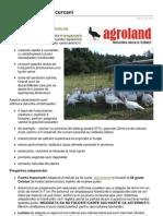 Agroland.ro-curcani Crestere Curcani