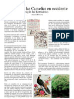 Historia das camélias no Ocidente-kiwisava