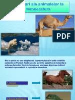 Adaptarea Animalelor La Temperatura