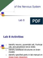 Lab 08 Neuron Histology & Brain