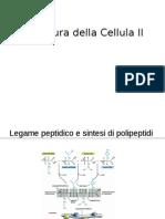 Bc2a-Strutt Cellula Iiweb