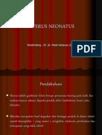 IKTERUS NEONATUS