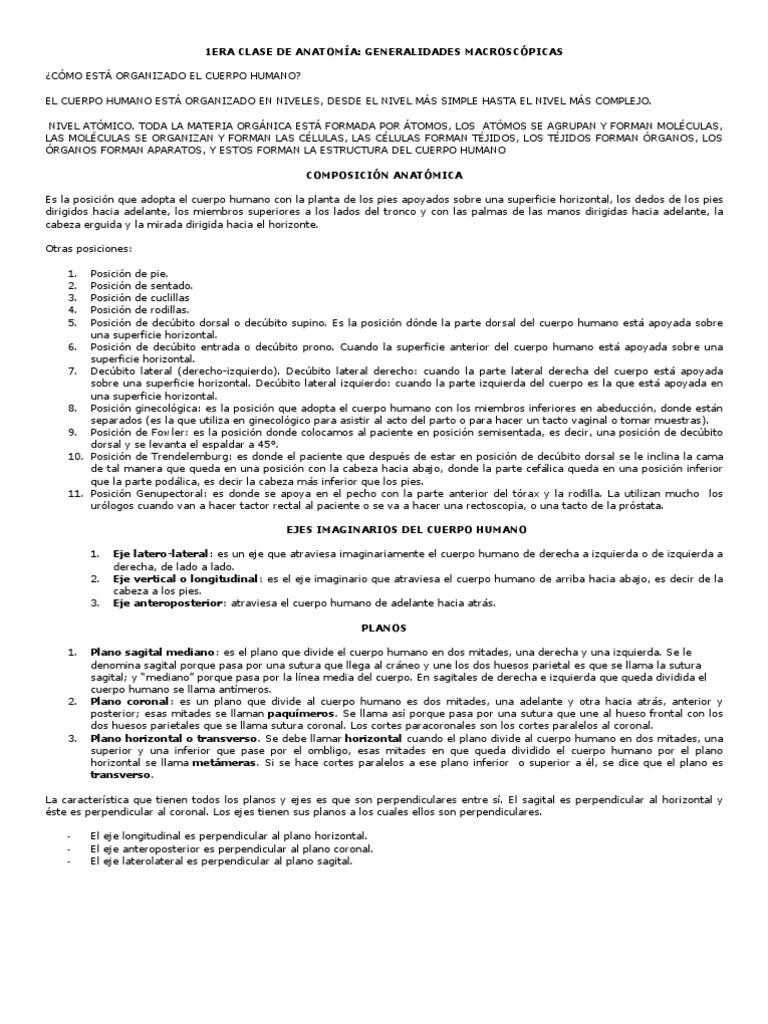 1ERA CLASE DE ANATOMÍA
