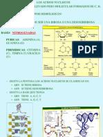 08_biologia-Ac. Nucleico_5 REVISADO.pptx