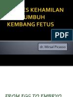 Tumbuh Kembang Fetus