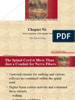 spinal cord.ppt