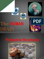 PDF Human Brain