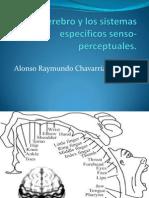 El cerebro y los sistemas específicos senso-perceptuales