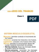 04  Fisiologia
