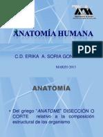 1 ANATOMIA HUMANA.pdf