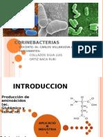 CORINEBACTERIAS (1)