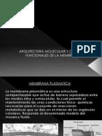 Arquitectura Molecular y Componentes Funcionales de La Membrana