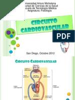 Circuito Cardiovascular